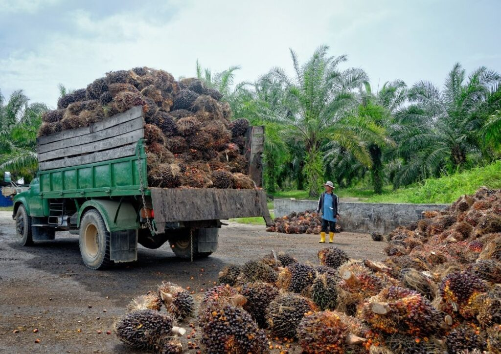 Palm oil farm with workers.