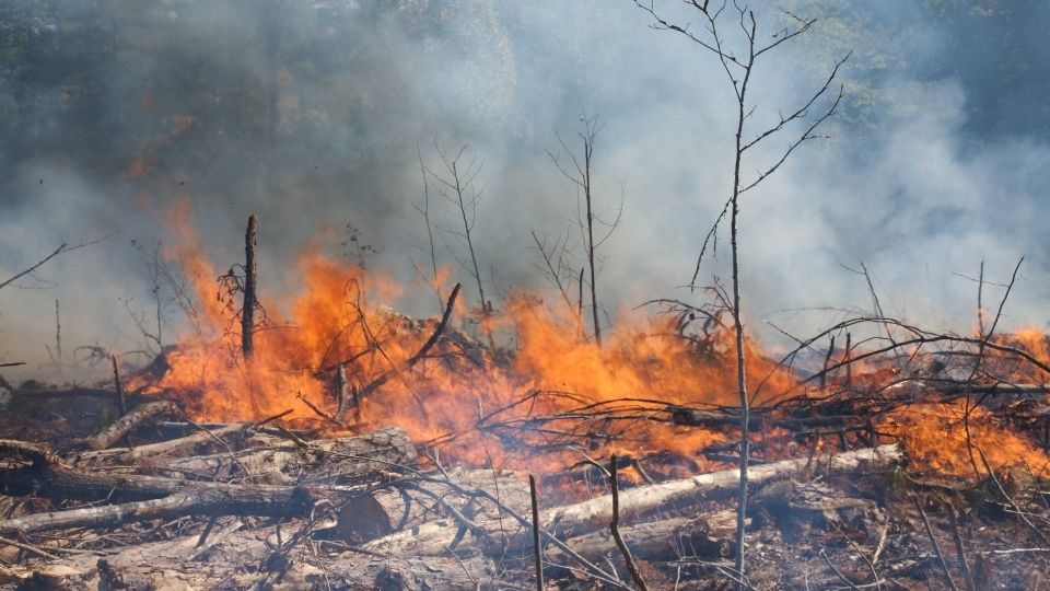 Forest being deforested and burnt