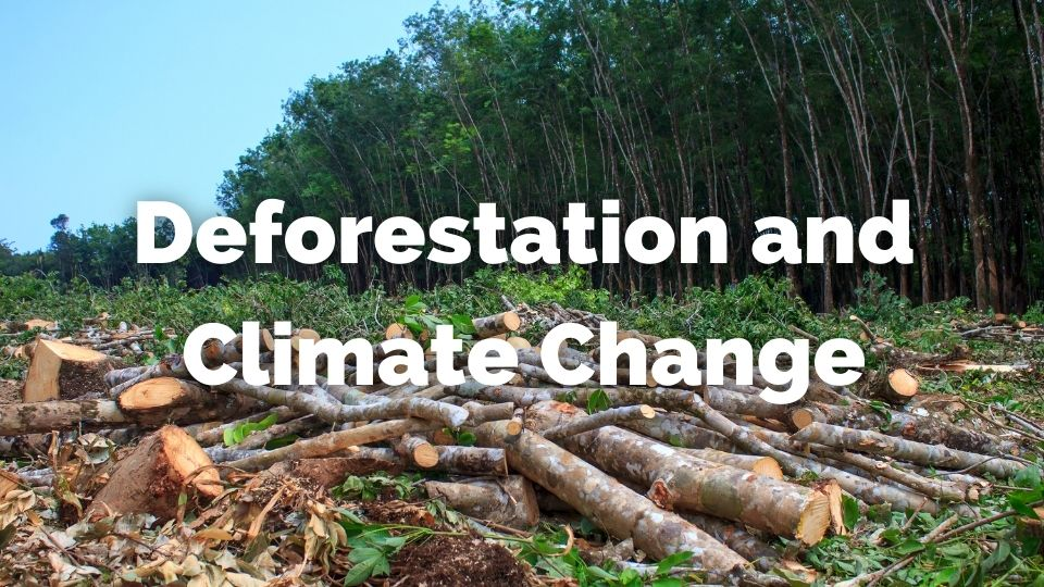 How does deforestation cause climate change?