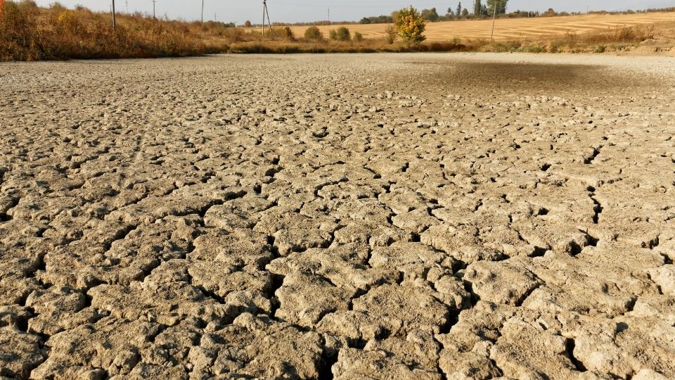 Inhospitable dried soil due to deforestation