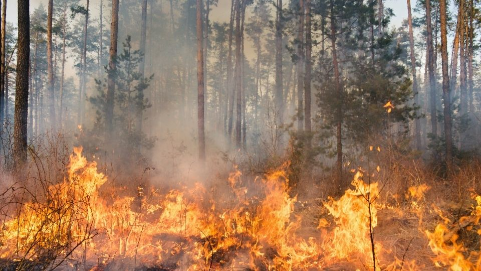Forest fires causing biodiversity loss